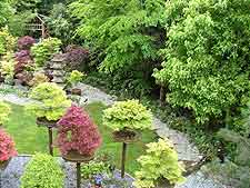Aerial photo of bonsai plinths