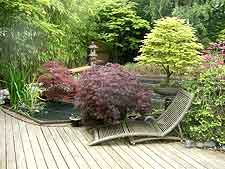 Maples, bonsai and decking