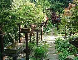 Watering Bonsai Trees