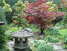 Bonsai Tree Pests
