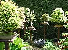 Bonsai Accent Plantings