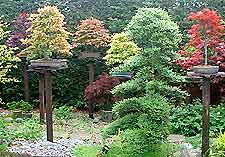 Glossary of Bonsai Terms