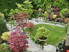 View of bonsai display