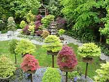 Photo of Japanese garden and bonsai