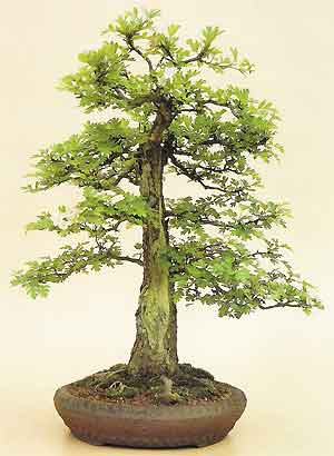 Absent Friends  Bonsai_hawthorn_carved4