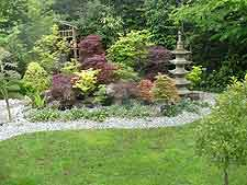 Collection of Japanese maples, with pagoda