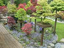 Photo showing bonsai displayed on plinths