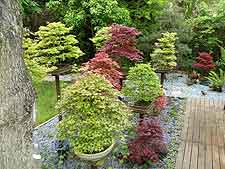 Picture of bonsai plinths