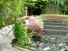 Japanese Gardens And Bonsai Information About Ponds Keeping Koi Carp And Water Features