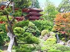 Further view of Japanese gardens in San Francisco