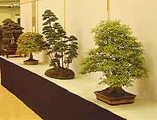 Exhibiting Bonsai