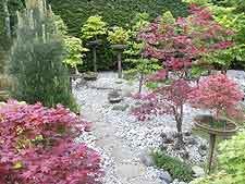 Maples and pathway