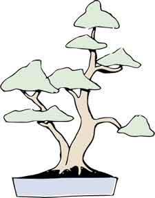 Twin trunk style bonsai