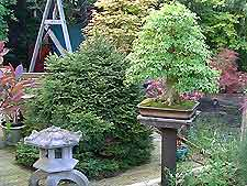 Phenomenal Bonsai Tree Wiring Information About Wiring Bonsai Trees Wiring 101 Mecadwellnesstrialsorg
